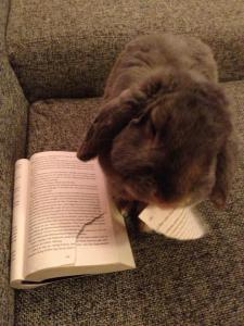 Gråis läser  bok.