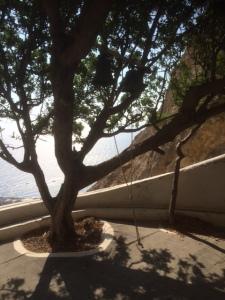 'Klocktorn' med klockorna fästa i ett olivträd, och ett rep att dra i.